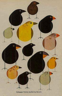 Charly Harper -- Darwin's Finches.