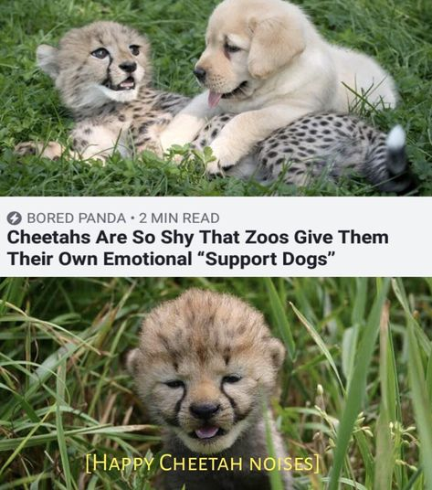 Cute Little Animals, Cute Funny Animals, Funny Cute, Cute Cats, Super Funny, Funny Animal Memes, Funny Memes, Funniest Memes, Animal Quotes