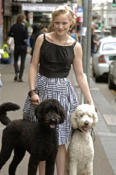 Exceptional Poodles Information Is Offered On Our Web Pages