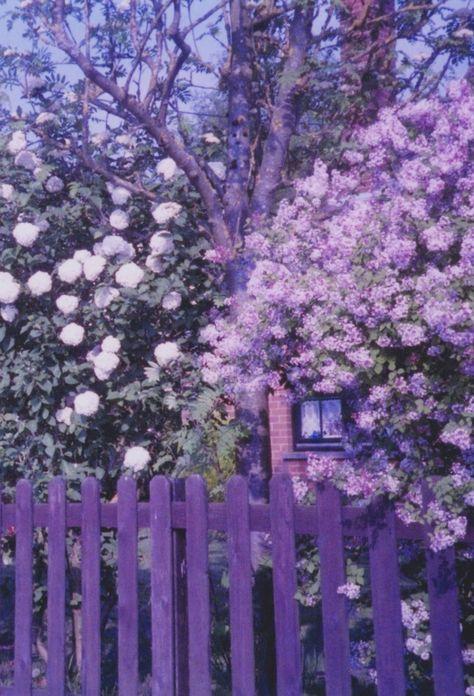 Purple garden with purple flowers and fence OMG the color! Purple Haze, The Purple, Purple Walls, All Things Purple, Shades Of Purple, Purple Flowers, Purple Stuff, Periwinkle, Purple Food