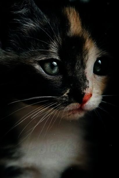 Shared Cats And Kittens Magazine Pin Cute Cats Pretty Cats