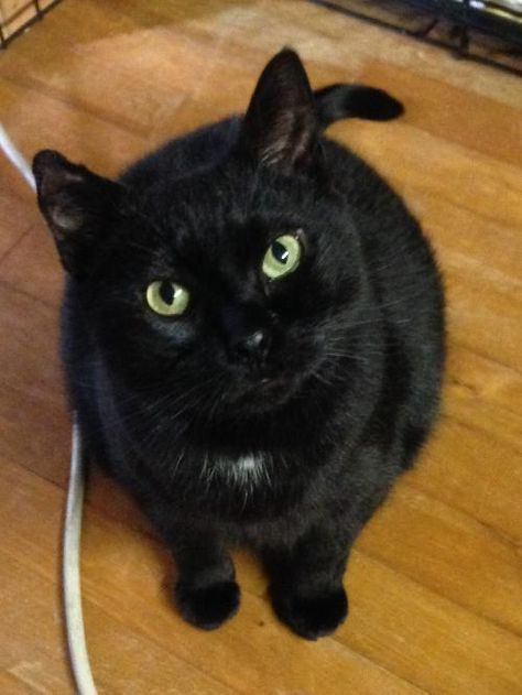 Adopt Vena Please Read About Me On Pets Adoption Cats