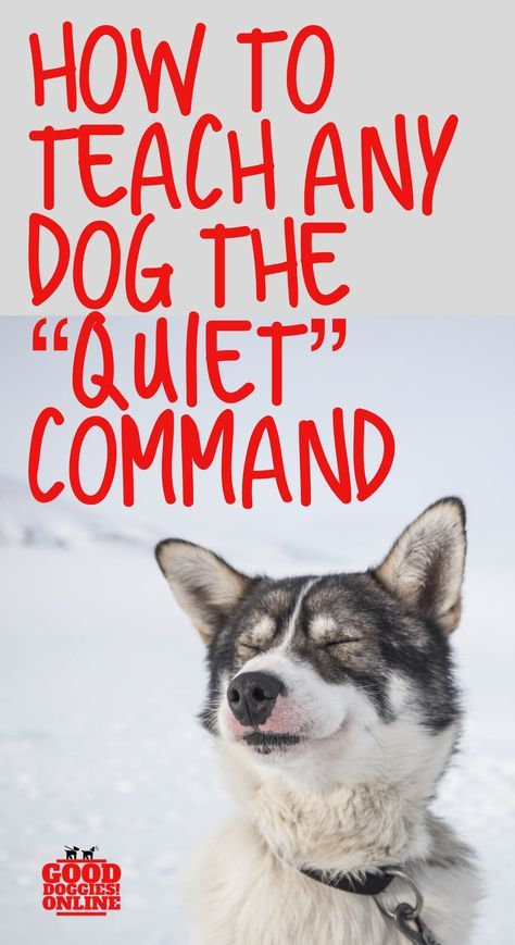 Stop dog barking with the quiet command. Check out these dog training tips and obedience training ideas to stop barking. Stop dog barking with the quiet command. Check out these dog training tips and obedience training ideas to stop barking. Training Your Puppy, Dog Training Tips, Potty Training, Training Classes, Training Online, Agility Training, Training Academy, Dog Agility, Training Pads