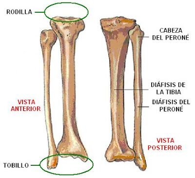 Huesos De La Pierna Derecha Huesos De La Pierna Imagenes