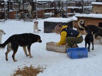 Rumanische Hundelager Im Winter Bucov Im Schnee Hunde Amstaff Hund Tierheim