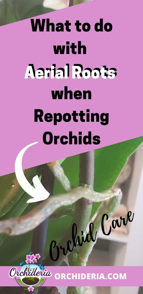 Orchid Plant Care, Orchid Plants, Orchid Flowers, Indoor Orchids, Orchids Garden, Indoor Plants, Pruning Orchids, Orchid Propagation, Garten