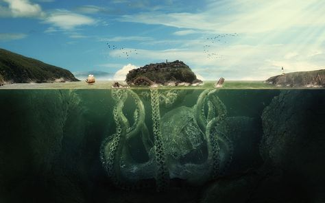 30 Ingenious Octopus Photographs « Stockvault.net Blog