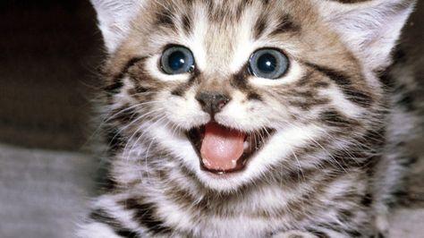 Ecco i nomi di gatto più popolari in America - Petsparadise