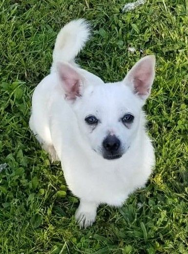 Dogs For Adoption Near St Catharines On Petfinder Animal