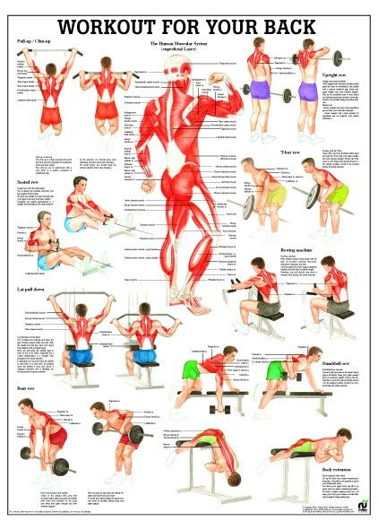 Workout For Your Back Laminated Fitness Poster