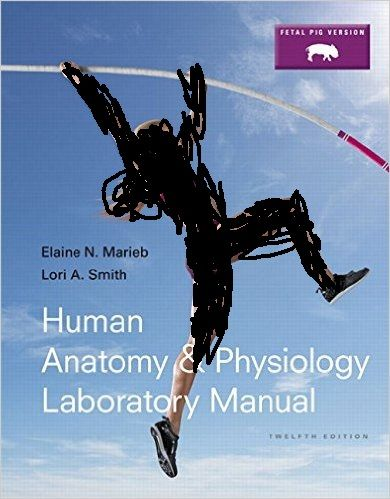 Solution Manual Human Anatomy And Physiology Laboratory