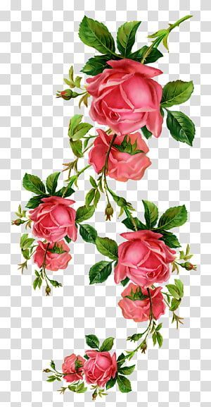 Red Flowers Paper Flower Rose Transparent Background Png Clipart Watercolor Flowers Paintings Flower Painting Pink Watercolor Flower