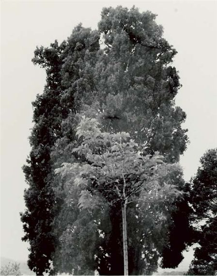 Harry Callahan: From a Recently Acquired Collection - The