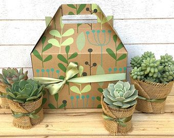 Christmas Succulent Gift.Christmas Succulent Gift Box Garden In A Box Gift For