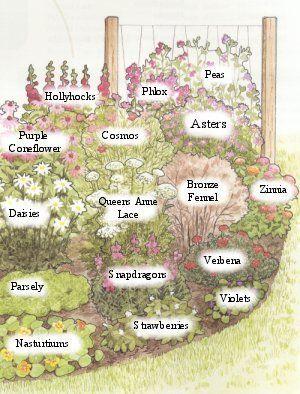 BUTTERFLY GARDEN PLANSPinned From Http://gardencenterohio.com | Homestead |  Pinterest | Butterflies, Butterfly And Gardens