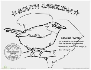 Pin By Diane Zini On Ideas For Slates South Carolina State Birds