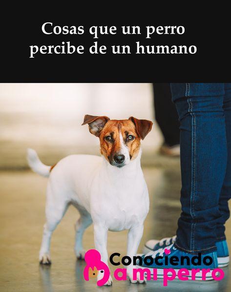 120 Ideas De Cooper En 2021 Perros Mascotas Cosas Para Perros