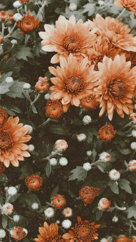 aesthetic flowers 🍂