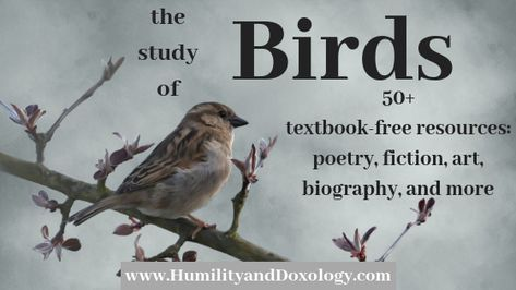 Birds: 50+ resources for your elementary and early-middle school science and nature studies. Books, art, nature study, and more!