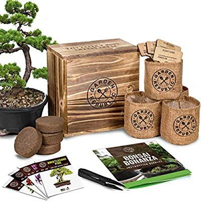 Bonsai Tree Seed Starter Kit Mini Bonsai Plant Growing Kit 4 Types Of Seeds Potting Soil Pots Pruning Shears Sciss Bonsai Kit Tree Seeds Seed Starter Kit