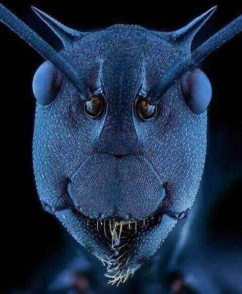 Dentaltown - Yes, ants have teeth. An ant face under an electron microscope shows their teeth. Reptiles, Cool Insects, Bugs And Insects, Microscope Pictures, Electron Microscope Images, Animals And Pets, Cute Animals, Mantis Religiosa, Black Ants