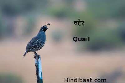 Birds Name In Hindi And English Pakshiyon Ke Naam Good Morning Inspirational Quotes Birds Hindi