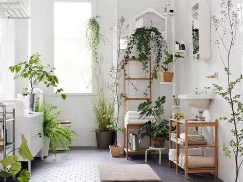 Arredare Casa Con Le Piante Si Puo Giardini Di Casa Piante Da