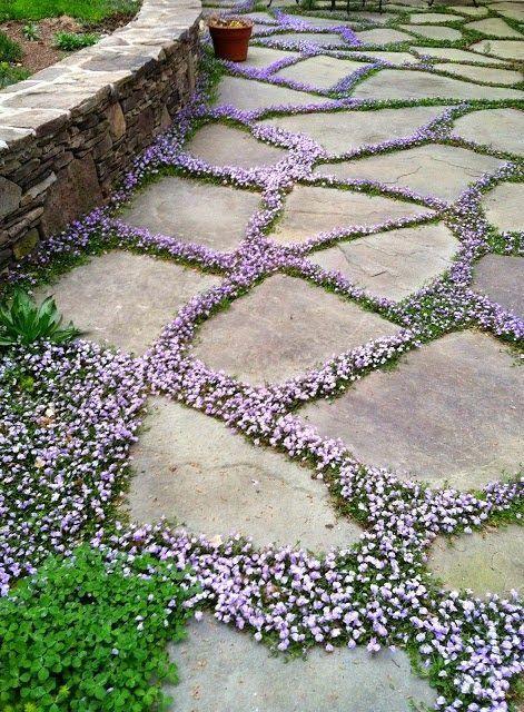 Des joints verts entre les dalles ou les pavés d\u0027une terrasse ou d - Allee De Jardin En Pave
