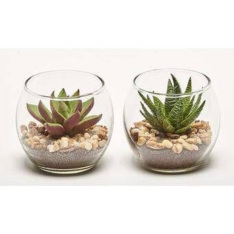 2 Piece Succulent Plant In Pot Set Succulents In Glass Planting Succulents Pot Sets