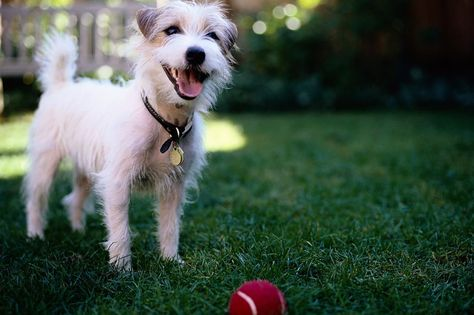 Training Your Pet To Leave It Can Keep Your Dog Safe Dogs