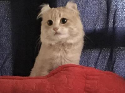 Pin On Bernie Cute Cat