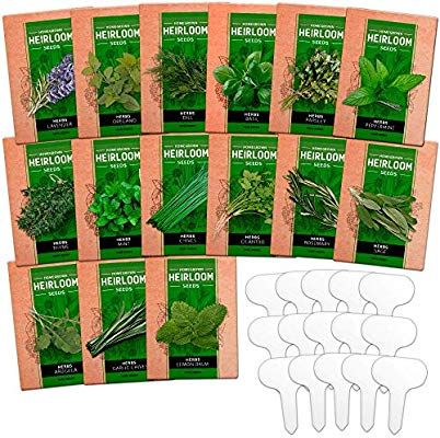 Amazon Com 15 Culinary Herb Seed Vault Heirloom And Non Gmo 4500 Plus Seeds For Planting For Indoor Or Outdoor Herbs Herb Seeds Outdoor Herb Garden Herbs