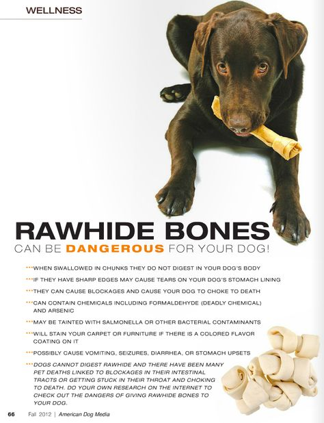 Rawhide Bones May Be Dangerous For Your Dog Talk To Your Vet