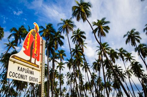 Kapuaiwa Coconut Grove is one of Molokai's most recognizable natural landmarks. Learn more here: http://gohawaii.com/molokai/regions-neighborhoods/central-molokai/kapuaiwa-coconut-grove #gohawaii