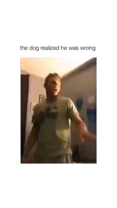 The Dog Like