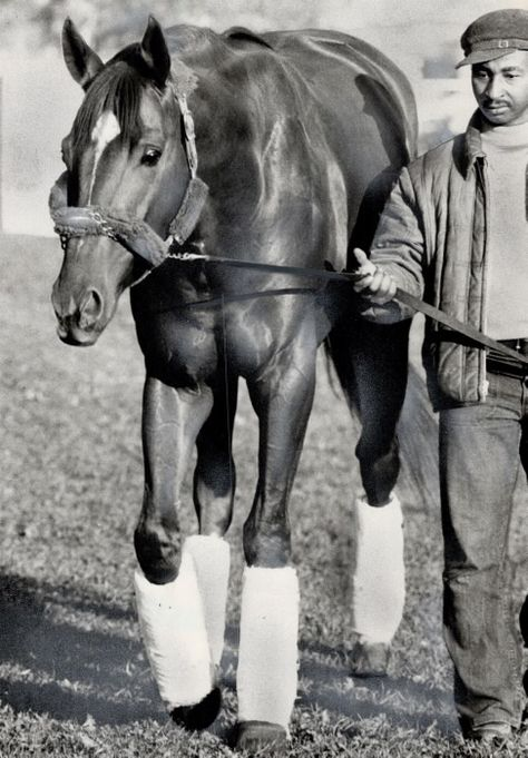 Secretariat's groom; Eddie Sweat; has looked after Triple Crown winner 12 to 14 hours a day for two years and he's proud of his job; but he admits he can't afford to be overwhelmed because then you'd start to get careless