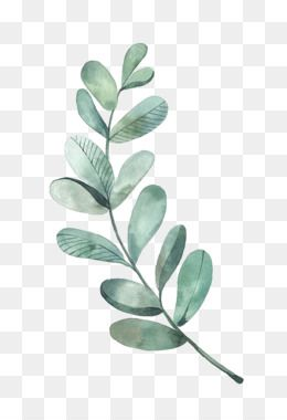 Leaves Png Leaves Transparent Clipart Free Download Eucalyptus