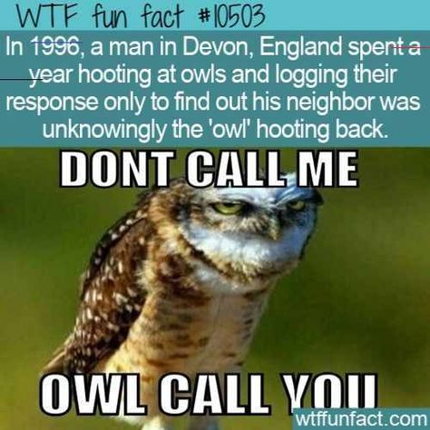 WTF Facts : funny, interesting & weird facts  WTF Fun Fact - Hooting or Hollering  #wtf #funfact #wt WTF Facts : funny, interesting & weird facts  WTF Fun Fact - Hooting or Hollering  #wtf #funfact #wtffunfact 10503 #1996 #Animals #Awesome #Devon #england #funny facts #Hooting #logging #neighbor #owl #random fact #random facts #random funny fact #wtf fun fact<br>