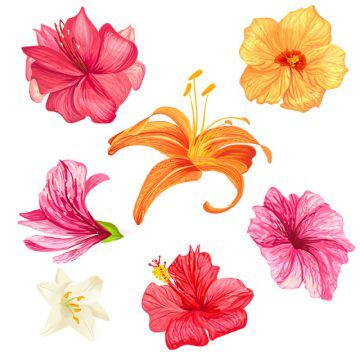 Hibiscus And Lily Flowers Flower Hibiscus Set Png And Vector