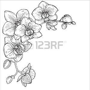 Orchidee Dessin Dessin Orchidée Tatouage Orchidee Dessin
