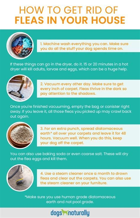 How To Get Rid Of Grass Fleas