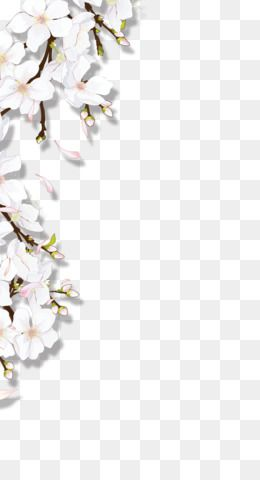 White Flowers Design Resource Collection Transparent Png Free Image By Rawpixel Com Aew White Flower Png White Flowers Vintage Flower Arrangements