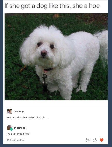 29 Tweets Tumblr Posts Anyone With A Small Fluffy Dog Will Find Extra Funny Tumblr Funny Funny Pictures Best Funny Pictures