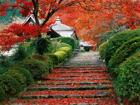 A beautifully colorful Japanese garden during autumn