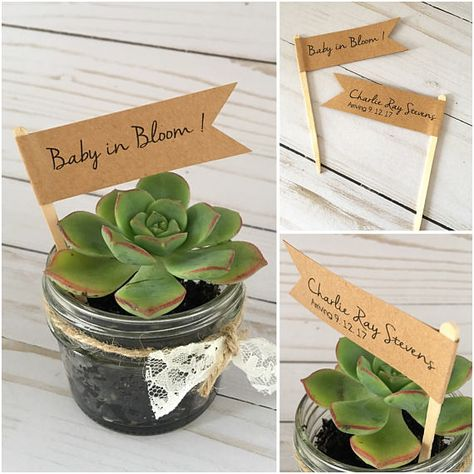 Baby in Bloom Plant Flags, Botanical Baby Shower, Plant Favor tags, Watch Me Grow, Potted Plant Pick, Baby Arrival Tags, Baby Gender Reveal Party PLEASE LEAVE THE EXACT WORDING FOR THE FLAGS UPON CHECKOUT This listing is for a set of flags on a stick- Minimum order of 20 ALL flags will