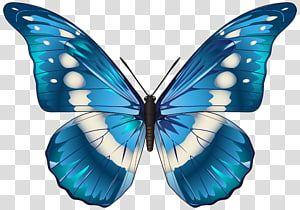 Monarch Butterfly Morpho Menelaus Morphinae Blue Png Blu Blue Blue Abstract Blue Abstracts Blue Background Blue Butterfly Wallpaper Blue Butterfly Morpho