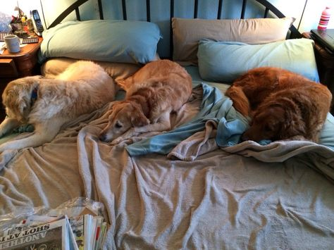 Three in a bed.