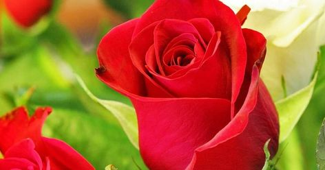 30 Gambar Bunga Mawar Dan Love Di 2020 Mawar Cantik Wallpaper