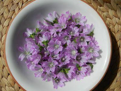 Malva Planta Comestible Y Medicinal Con Imagenes Malva Planta