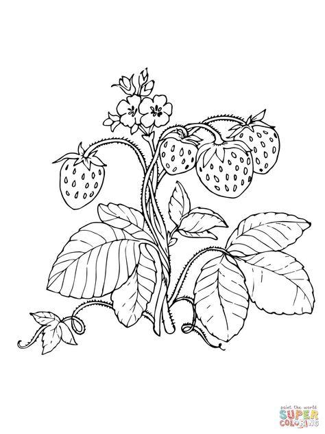 die 33 besten bilder zu erdbeere  erdbeeren snacks für